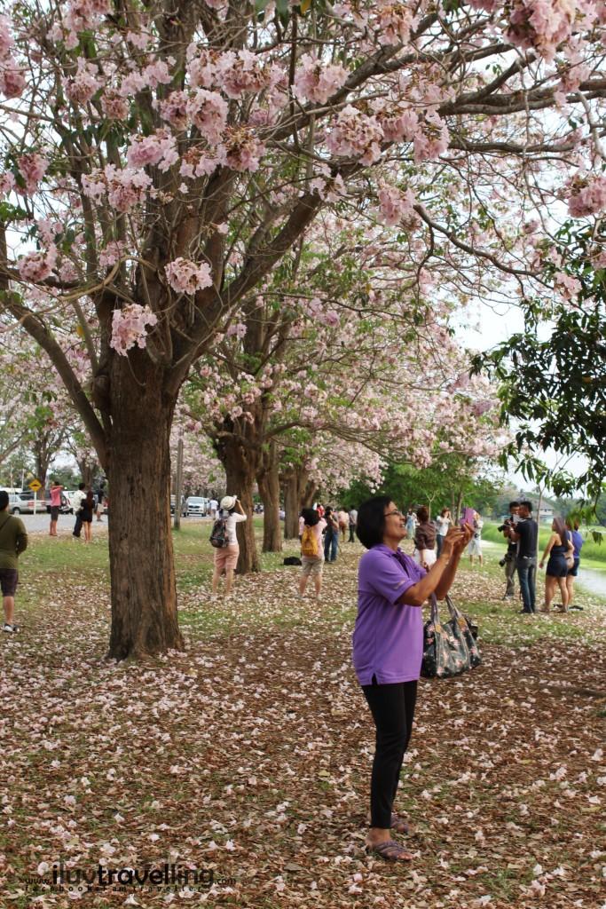ล้อมรอบไปด้วยหมู่มวลดอกไม้ ในหน้าร้อน เมืองไทย
