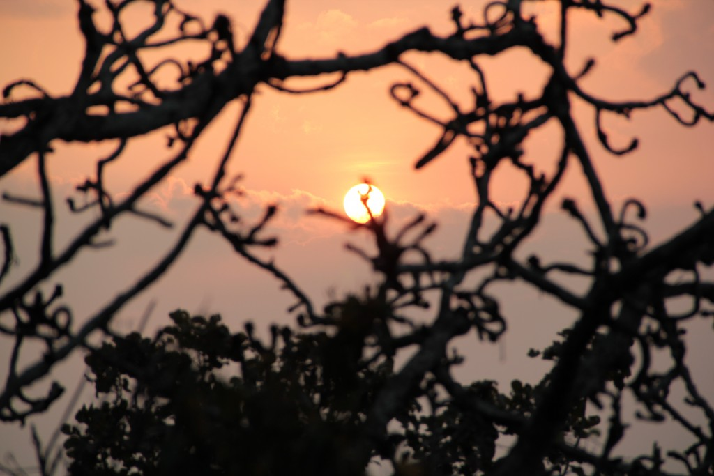 ยอดต้นไม้ ขณะกำลังพยายามปีนป่ายขึ้นผาหัวสิงห์ ได้ห้าเมตรถ้วน 555