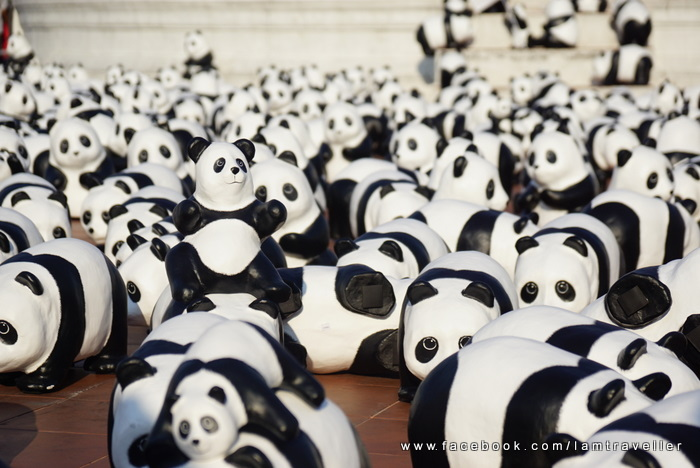 Panda_The Red Swing (12)